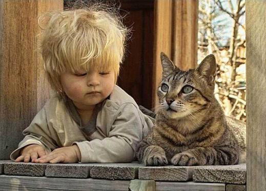 На крылечке два котёнка