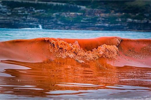 Красный прилив