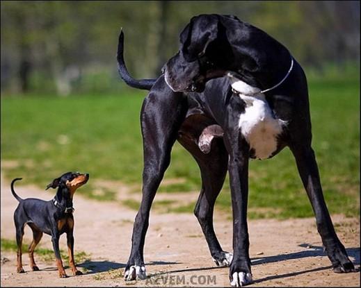 Хвост нужен собакам
