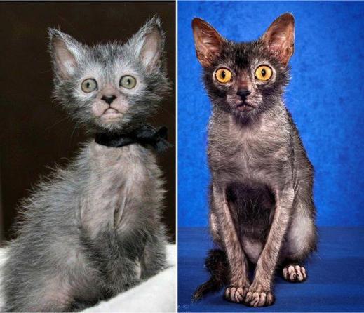 Мистическая кошка-оборотень