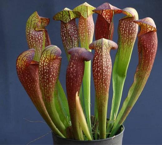 Цветы с характером