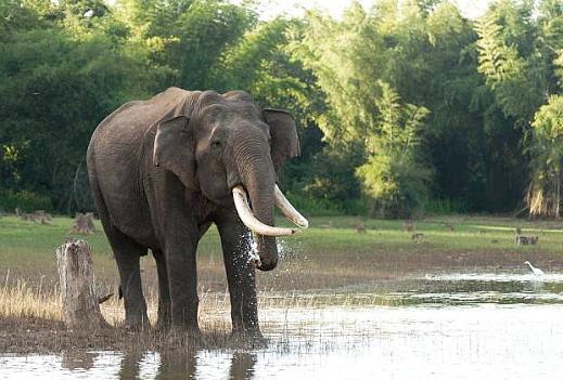 Дикий слон –убийца спас ребёнка